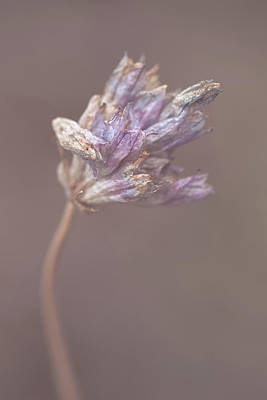 Photograph - Withering Purplehead by Alexander Kunz