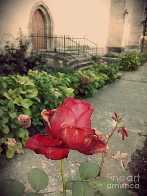 Photograph - Withering Rose by Erika H