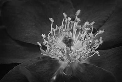 Photograph - Within A Flower Bw by Morgan Wright