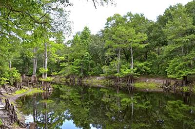 Photograph - Withlacoochee River Park by Carol Bradley