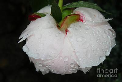 Photograph - Without Umbrella by Jutta Maria Pusl