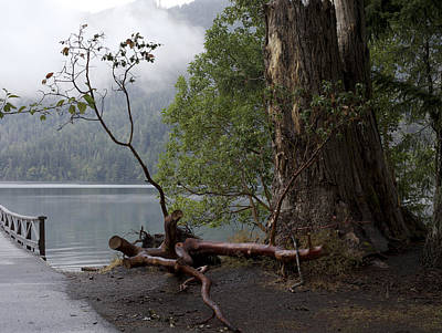 Photograph - Witness Tree - Peaceful Lake by Jane Eleanor Nicholas