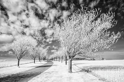 Infra-red Photograph - Wolds Way Near Huggate by Janet Burdon