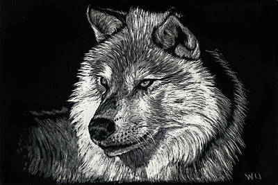 Drawing - Wolf-5 by William Underwood