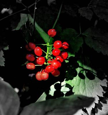 Wolf Berries Original