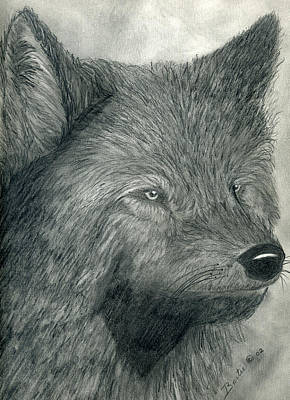 Drawing - Wolf by Bertie Edwards
