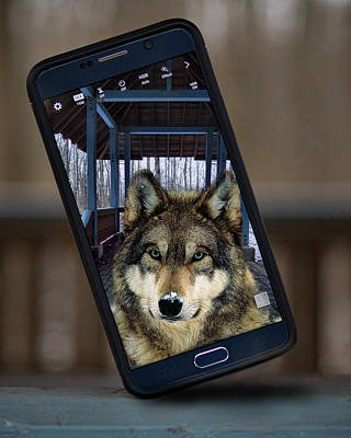 Photograph - Wolf Capture by Ron Grafe