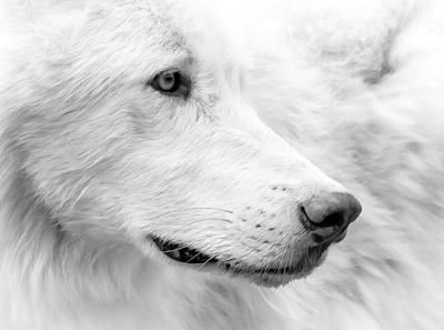Photograph - Wolf Close Up by Athena Mckinzie