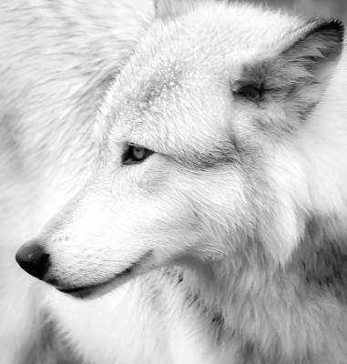 Photograph - Wolf Close Up II by Athena Mckinzie