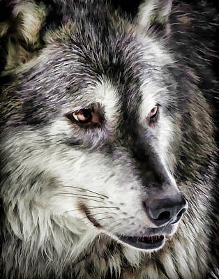 Photograph - Wolf Face II by Athena Mckinzie