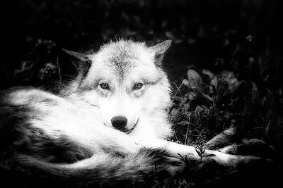 Photograph - Wolf Grin by Karl Anderson