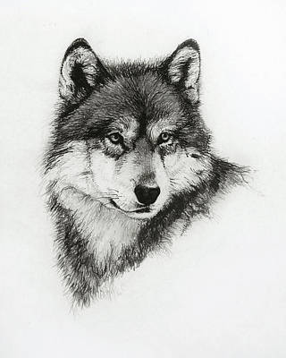 North Drawing - Wolf by Heather Theurer