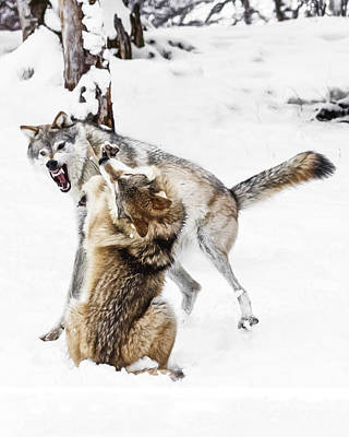 Photograph - Wolf Hierarchy by Wes and Dotty Weber