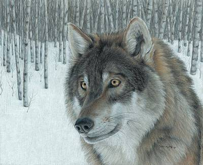 Drawing - Wolf In Aspens by Carla Kurt