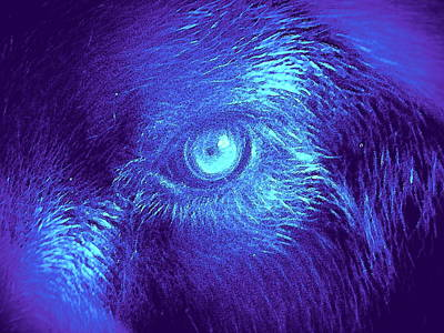 Painting - Wolf In Blue by David MCKINNEY