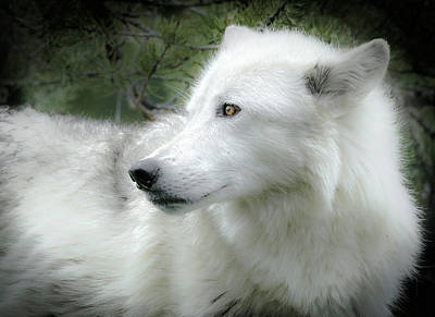 Photograph - Wolf In The Wild Portrait by Athena Mckinzie