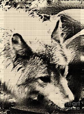 The Wolves Domain Mixed Media - Wolf Lite by Debra     Vatalaro