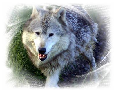 Wolf Art Print by Marty Koch