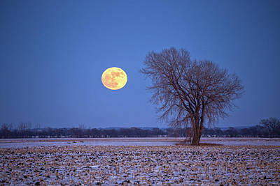 Photograph - Wolf Moon by Penny Meyers