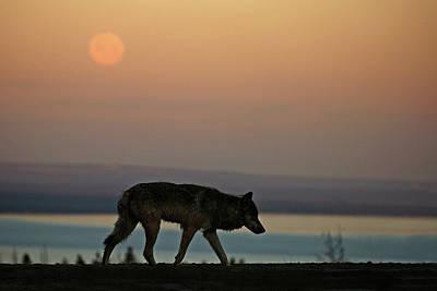 Photograph - Wolf Moon by Sandy Sisti