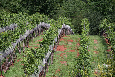 Photograph - Wolf Mountain Vineyards by David Bearden