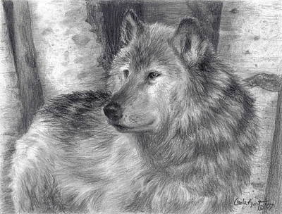 Drawing - Wolf Number Six by Carla Kurt