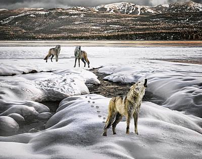 Wolf Pack Howling Art Print by Janet Ballard
