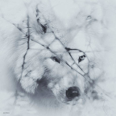 Photograph - Wolf Portrait by Crystal Wightman