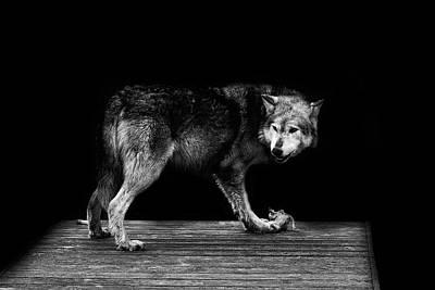 Wolf Art Photograph - Wolf Portrait by Martin Newman