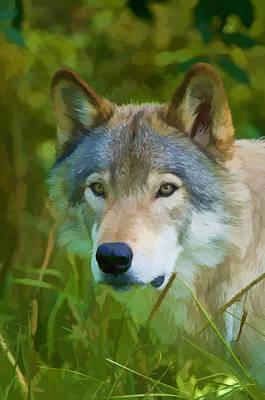 Wolf Portrait Original