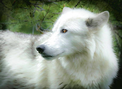 Photograph - Wolf Portrait Paint by Athena Mckinzie