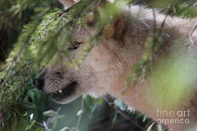 Photograph - Wolf Profile by Wilko Van de Kamp