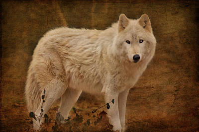 Photograph - Wolf by Sandy Keeton