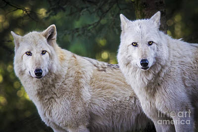 Photograph - Wolf Sisters by Sonya Lang