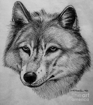 Animals Drawings - Wolf sketch by Nick Gustafson