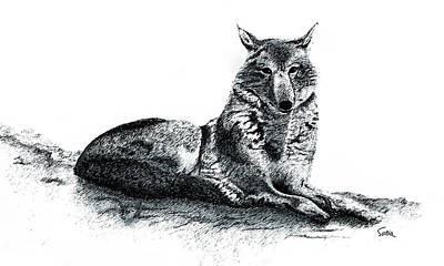 Drawing - Wolf by Sonia Wilkinson