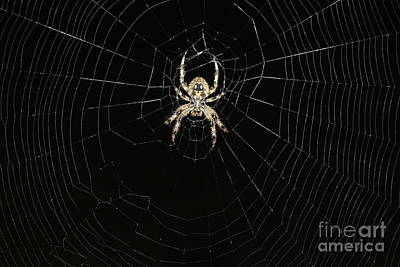 Photograph - Wolf Spider And Web by Mark McReynolds