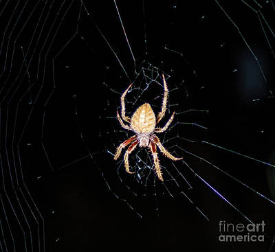 Jeffery Johnson Photograph - Wolf Spider Back View by Photo Captures by Jeffery