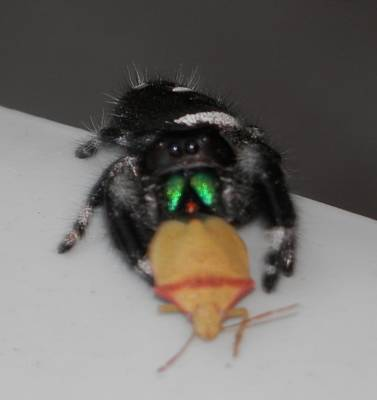 Photograph - Wolf Spider Snackage by Belinda Lee