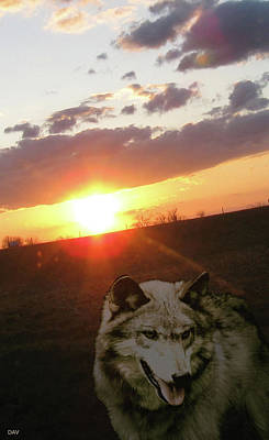 Wolf Sunset Art Print by Debra     Vatalaro