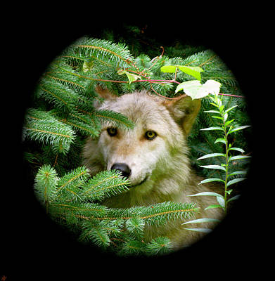 Wolf Thick Of The Woods Art Print by Debra     Vatalaro