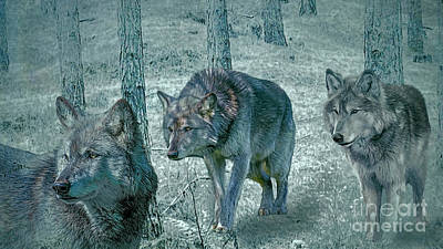 Photograph - Wolf Trio by Brian Tarr
