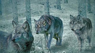 Photograph - Wolf Trio by Brian Tarr