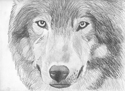 Pigatopia Drawing - Wolf Wildlife Portrait Original Sketch By Pigatopia by Shannon Ivins