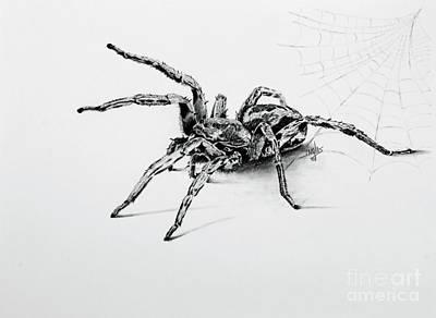 Drawing - Wolfie by Terri Mills