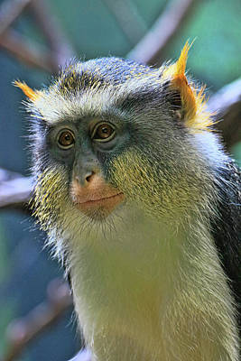 Photograph - Wolf's Monkey by Allen Beatty