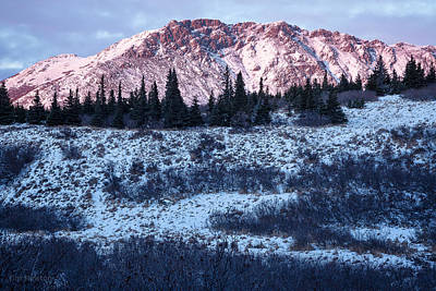 Photograph - Wolverine Alpenglow by Tim Newton