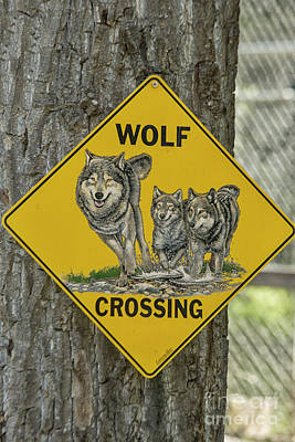 Crosswalk Photograph - Wolves Crossing by Patricia Hofmeester
