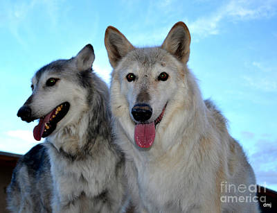 Photograph - wolves IV by Diane montana Jansson