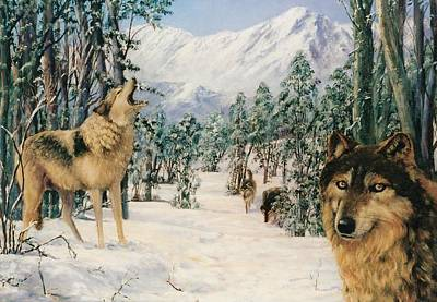 Painting - Wolves by Peter Jean Caley
